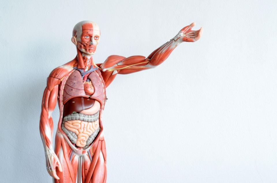 formation anatomie biomecanique